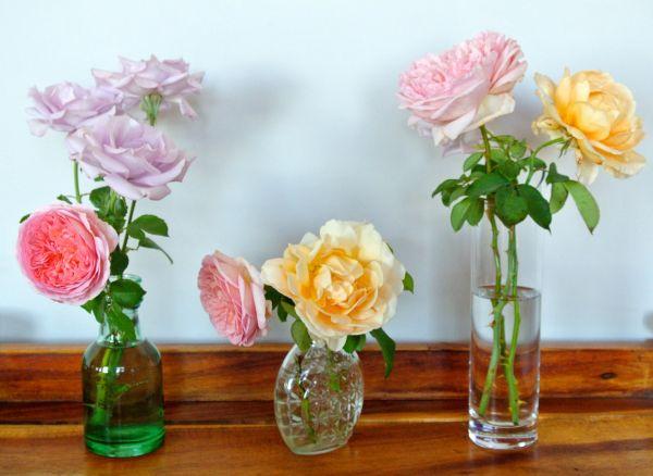 Jeanne Calitz:stillewe:rose